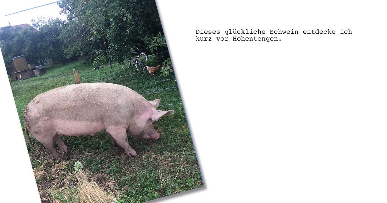 Schweine gehabt