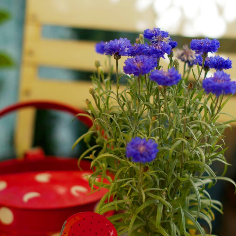 Teaser Urban Gardening