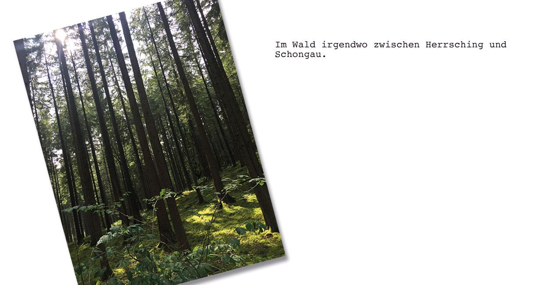Wald im Allgäu